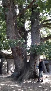 Cet arbre proche de la roche aux fées dégage une énergie magnifique