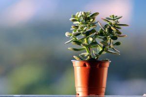Reiki Usui pour les plantes