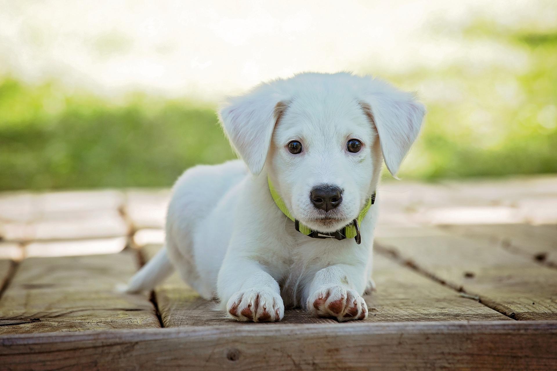 la lithothérapie au service des animaux